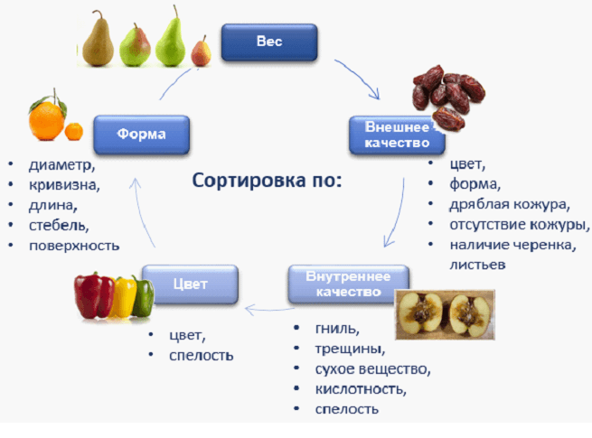 Cортировка и калибровка фрутов и овощей Elisam